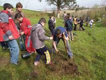 Jóvenes plantando árboles